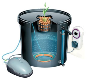 home hydroponics is the wave of the future!