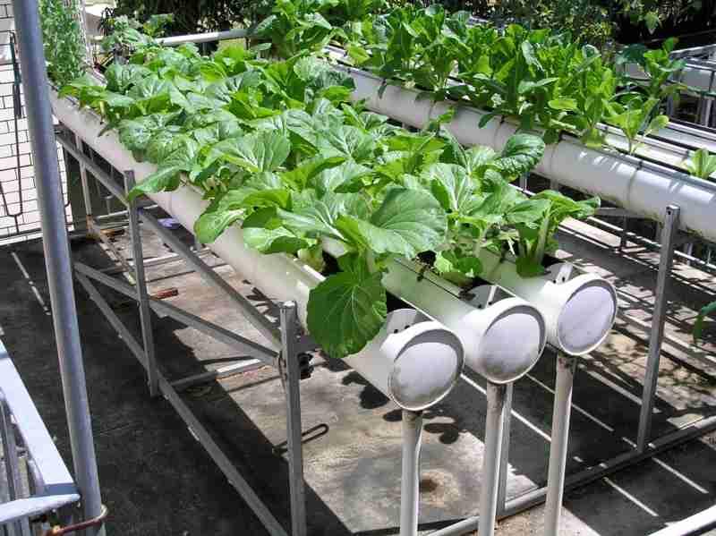 Hydroponics system for Hydro gardens