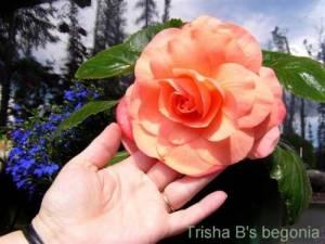 Advanced Nutrients Big Bud Flower